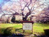 iPhoen写真家による阿佐ヶ谷住宅写真集出版プロジェクト始まる。
